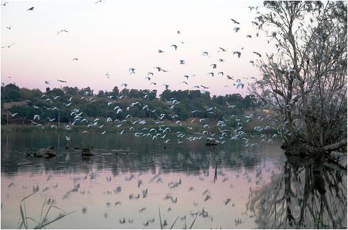 Oiseaux dans le lac de Reghaia