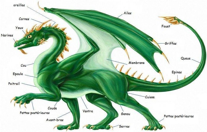 Un dragon, à quoi ça ressemble ? : Les Dragons, tout savoir...